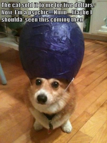 psychic corgi Cats - 8341187072