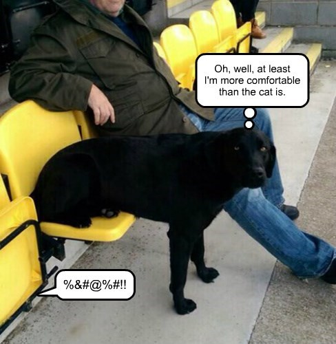 dogs,labrador,seat,Cats,comfortable