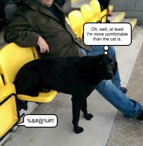 labrador seat Cats comfortable - 8341231104