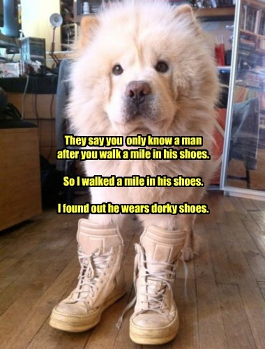 shoes,dogs,chow chow,dork