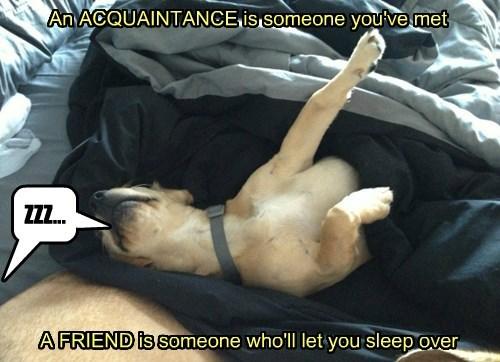dogs over friend sleep caption acquaintance - 8341284096