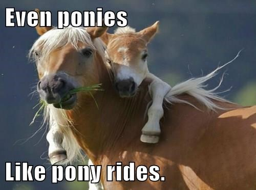 baby animals pony squee horse - 8341401600