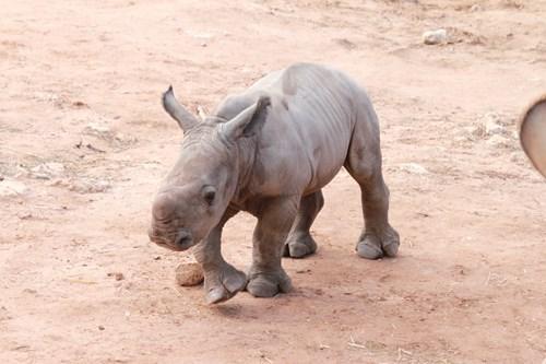 rhino cute - 8341482240