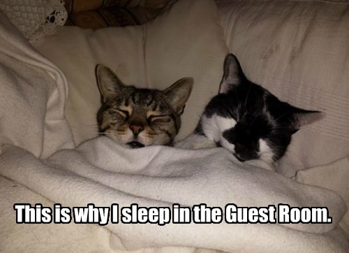 Cats,bed,tucked in,sleeping