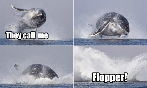 Flipper's cousin