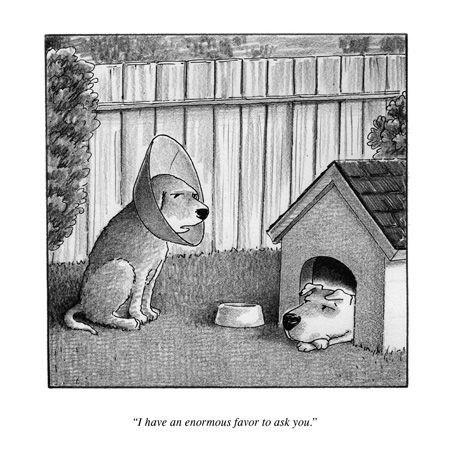 cone,dogs,funny