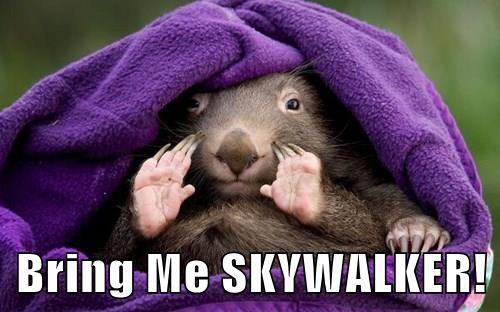 marmot star wars rodent - 8342079232