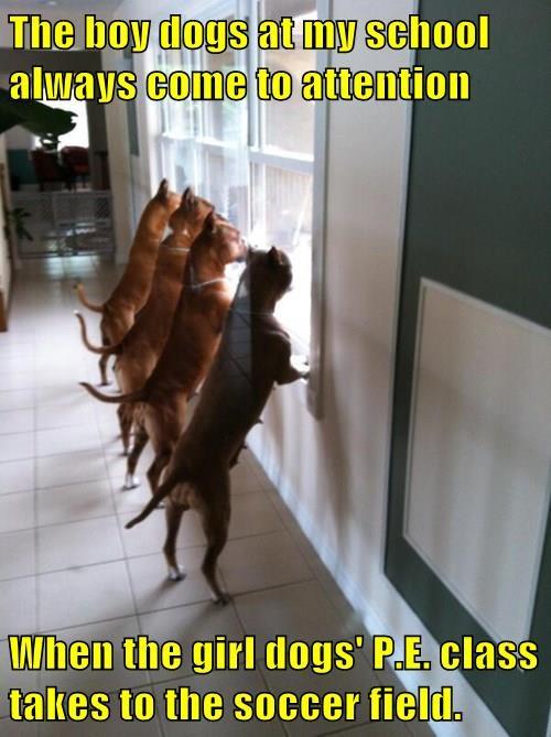 dogs school girls soccer caption field - 8342099456
