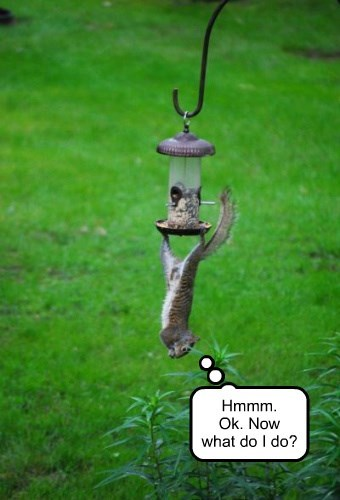 cool hanging stuck squirrel upside down - 8342123264