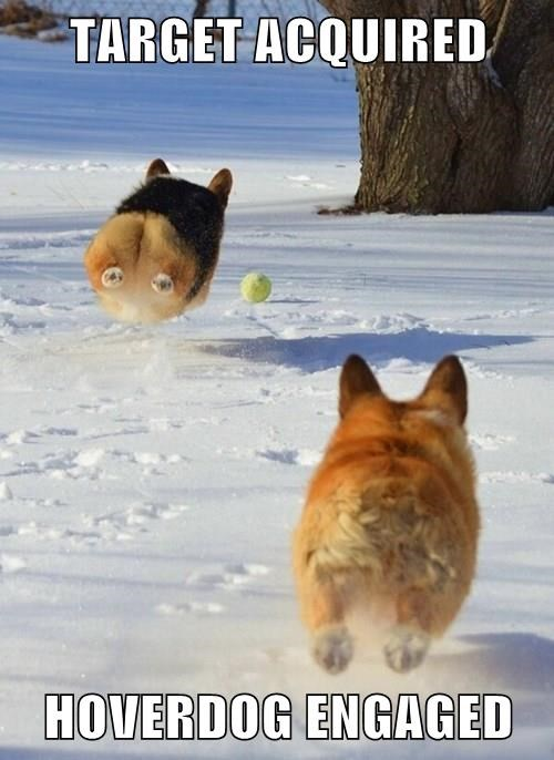 hoverdog,attack,ball,corgi