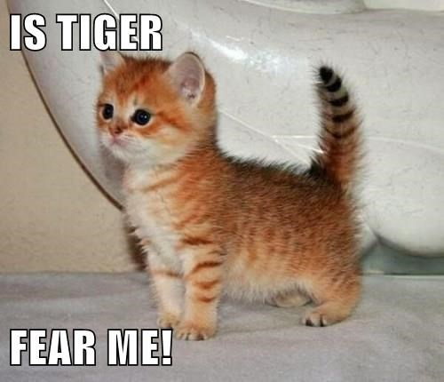 baby animal kitten tiger squee - 8342389760