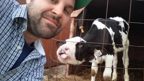 manimals,selfie,cows