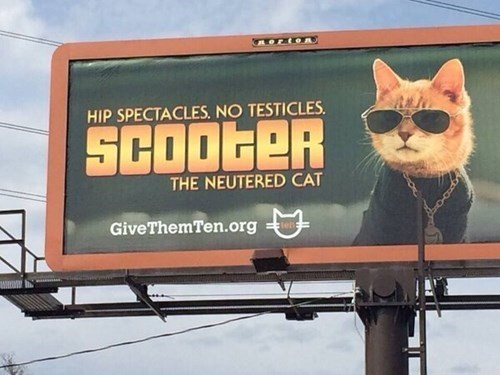 billboards,Cats