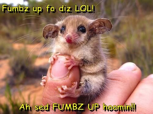baby animals,tiny,cute,thumbs up,squee
