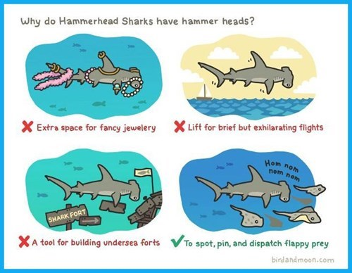 hammerhead,sharks,web comics