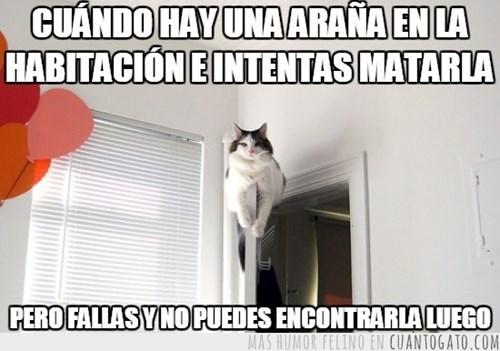 gatos bromas Memes animales - 8342629888