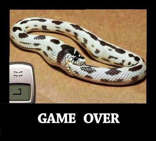 game over funny snake - 8342697216