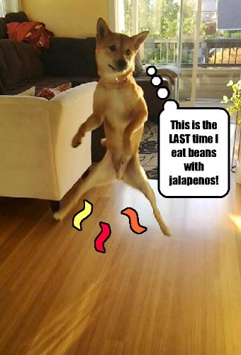 dogs Jalapeño beans captions funny - 8342790144