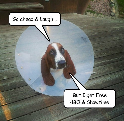 dogs hbo showtime laugh caption free - 8342955520