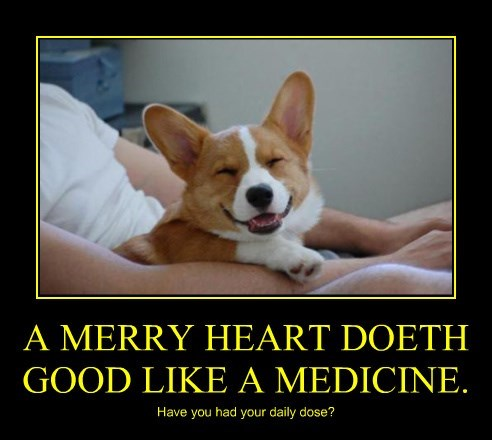 dogs,heart,medicine,caption,merry