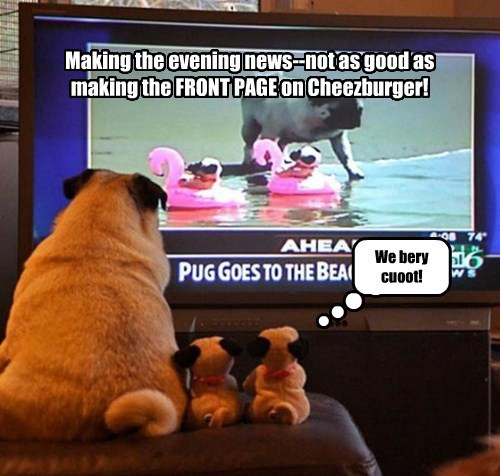 dogs,I Can Has Cheezburger,pug,news