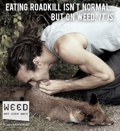 funny Not Even Once roadkill weed wtf