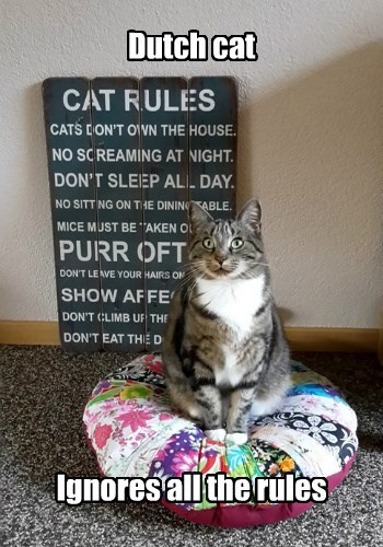 Ignores all the rules Dutch cat