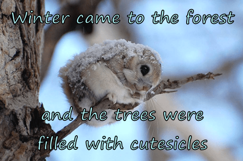 baby animals cute squee icicle winter - 8343429120
