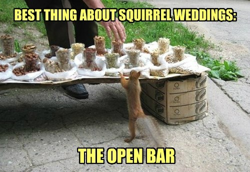 bar,nuts,squirrel,wedding