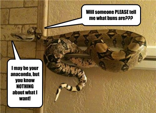 anaconda buns do not want snake