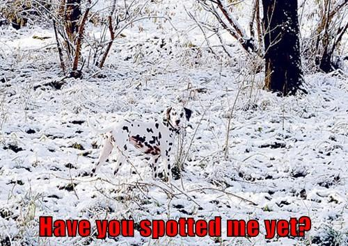 dalmation dogs hidden spots - 8343467776