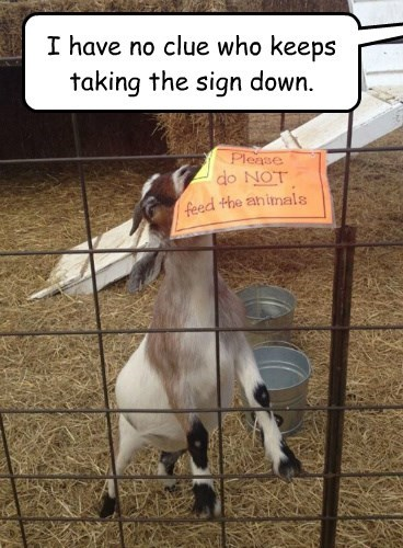 food,do not,goat,sign