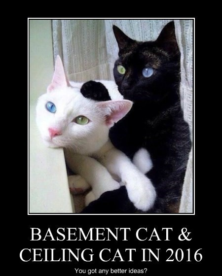 Cats,ceiling cat,basement cat,politics