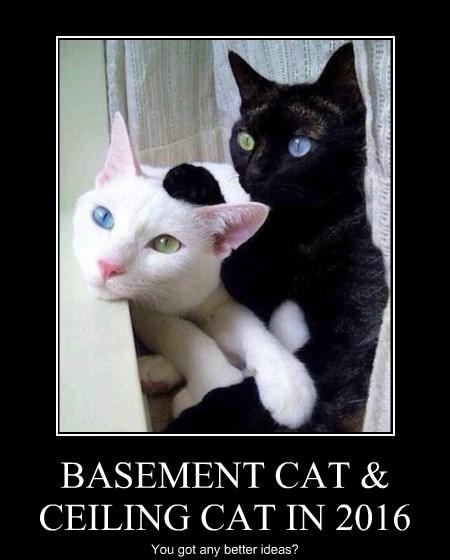 Cats ceiling cat basement cat politics - 8343492352