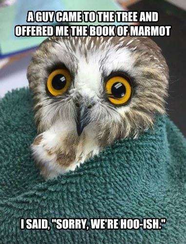 "A GUY CAME TO THE TREE AND OFFERED ME THE BOOK OF MARMOT I SAID, ""SORRY, WE'RE HOO-ISH."""