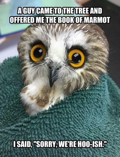 jewish Owl snack marmot - 8343518208