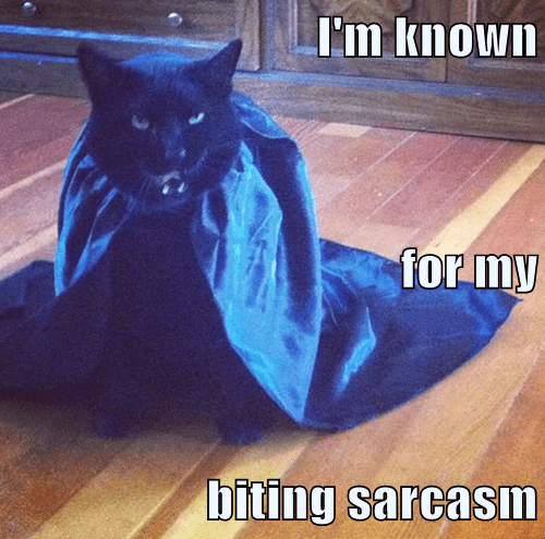 Cats,black cat,sarcasm,catula,Cats,black cat,sarcasm,catula