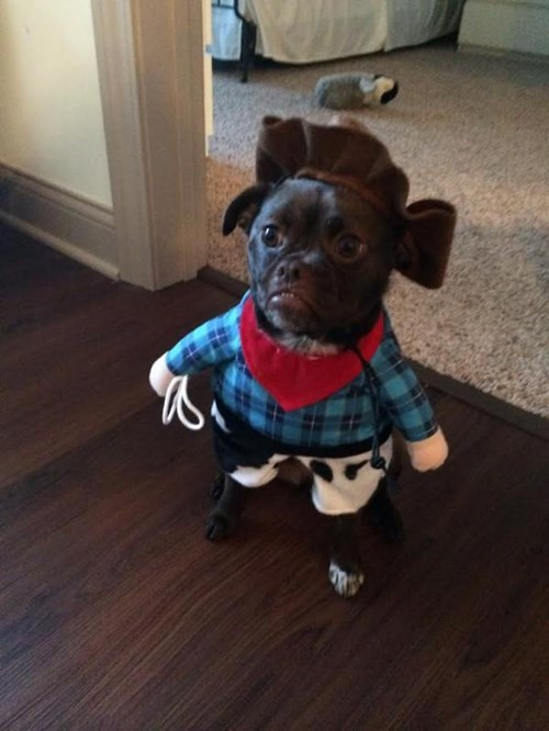 costume,dogs,cowboy,poorly dressed
