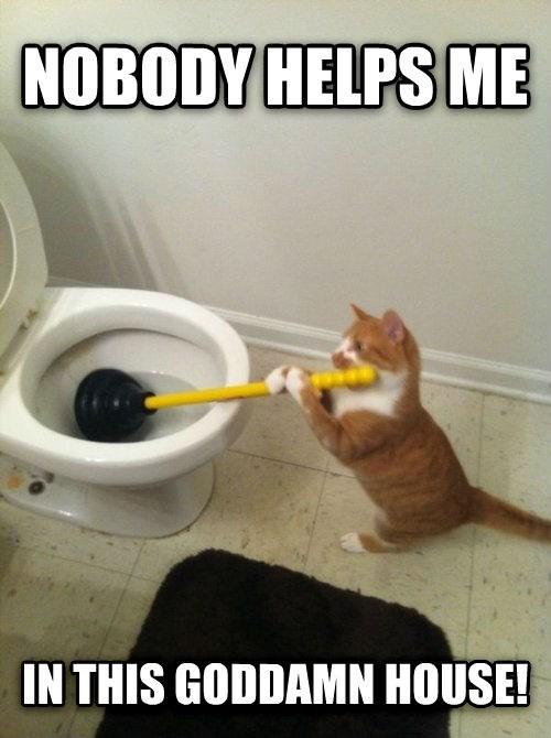 Cats chores - 8343867904