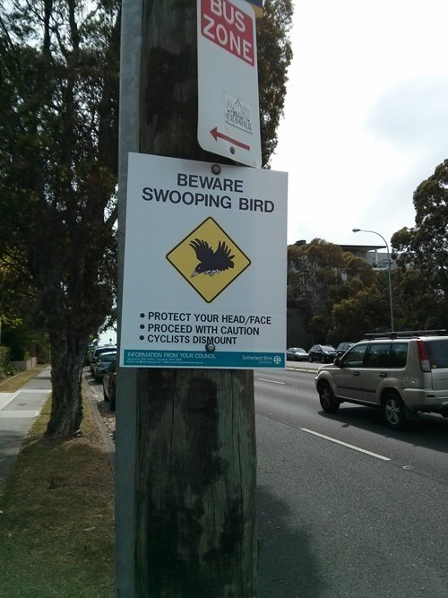 warning sign birds australia g rated fail nation - 8343999232