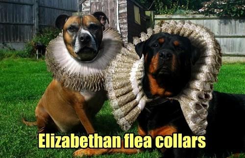 collar dogs fleas elizabethan royalty - 8344282880