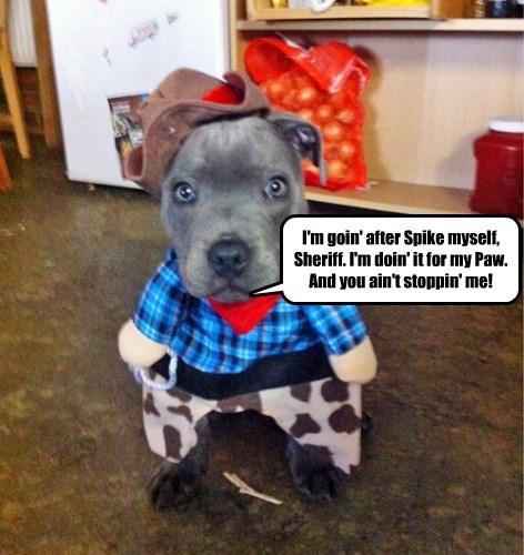 costume halloween cowboy western puppy - 8344308480