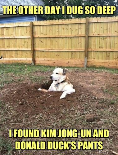dogs donald duck dig kim jong-un North Korea - 8344343552