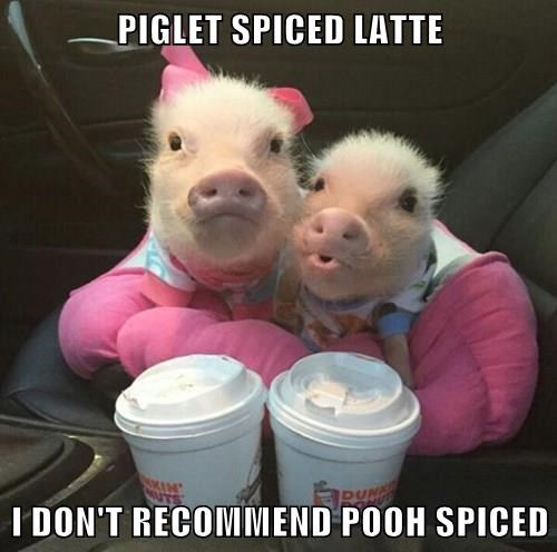 baby animals,coffee,pig,pooh,pumpkin spiced latte