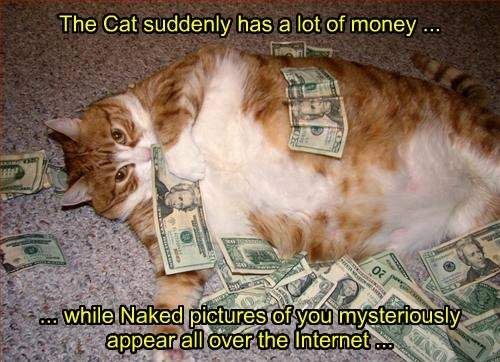 Cats,money,the internets,tabby