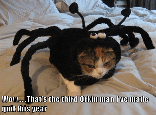 Cats costume halloween spider - 8345083904