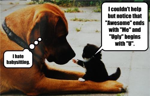 Cats babysitting dogs kitten - 8345249024