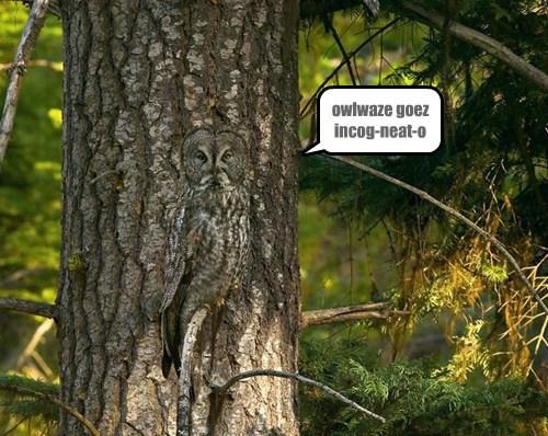 birds hidden Owl ninja - 8345492224