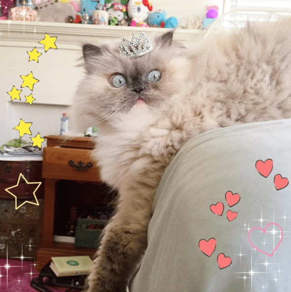 stickers floof Fluffy instagram fabulous sassy Cats