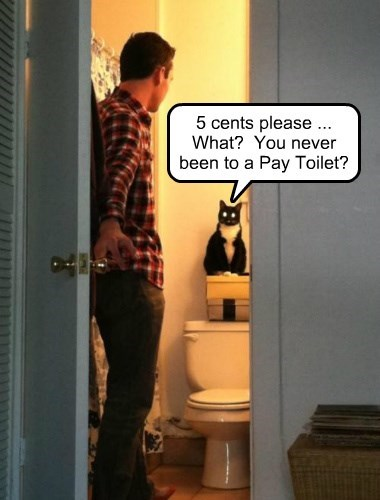 Cats,toilet,toll